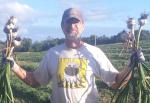 2013 Garlic Harvest