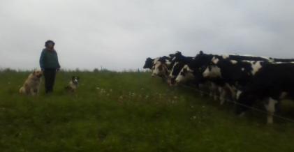 Mariénne, Oberon and Titania facing off with the herd.