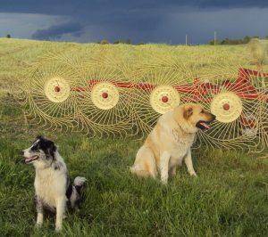 Dogs & Rake