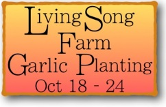 Garlic Planting 2018